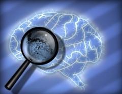 brain_d